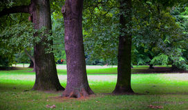 Lush forest Stock Photography
