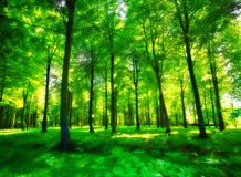 Lush forest in sunlight Stock Images