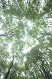 Forest up view from bottom Stock Photo