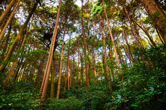 Lush forest. With vary tall trees stock photography