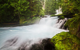 Lush Forets and Gentle Water on the McKenzie River, Oregon, USA Stock Photos