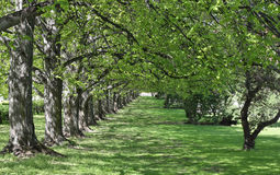 Lush Garden Alley. Lush green garden alley with shimmering light and space for your text stock images
