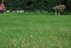 Lush garden grass with flowers in distance. Garden grass close-up with flowers in distance Stock Photography
