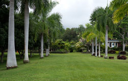 Lush garden in Hawaii Big Island. Well maintained lawn, beautiful palm trees Royalty Free Stock Photos