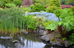 Lush garden pond Stock Images