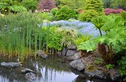 Lush Garden Pond Stock Images