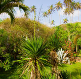 A lush garden in the tropics Royalty Free Stock Photos