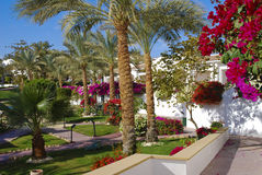 Lush gardens. A lush garden of an hotel we were during a vacation in Sharm el Sheik in Egypt, winter 2010. There were many colors and beautiful flowres. Also a Stock Images