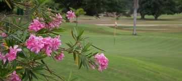 Lush golf green and pink flowers Royalty Free Stock Photo