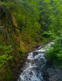 lush gorge стоковое изображение