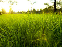 Lush Grass Royalty Free Stock Photos