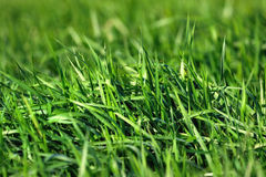 Lush Grass Royalty Free Stock Photography