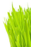 Lush grass Stock Photography