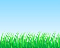 Lush grass. Royalty Free Stock Photos