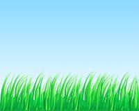 Lush grass. Royalty Free Stock Photos