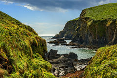Lush Grass at Cliffs of Moher in Ireland Stock Photography