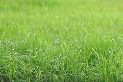 Lush Grass Field Stock Image