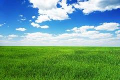 Lush grass field Royalty Free Stock Photo