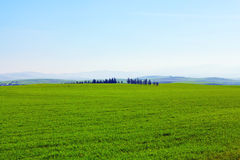 Lush grass field under blue sky Stock Photos