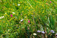 Lush grass and flowers Stock Image