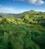 Lush grass in the mountains Stock Photo