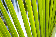 Lush green abstract tropical palm leaf background Stock Images