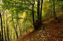 Free Lush Green And Yellow Leaves In The Deep Woods Stock Images - 131408814