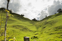 Lush green Andean landscape Stock Images