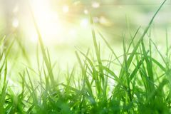 Lush green background with sun light and bokeh sparkle.  royalty free stock photo