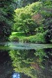 Lush green botanical garden Stock Images