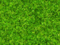 Lush green branchy thorn hi-res backgrounds Royalty Free Stock Photos