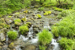 Lush green brook Royalty Free Stock Image