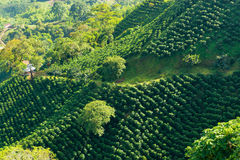Lush Green Coffee Landscape. Looking down on a landscape of hills covered in coffee plants near Manizales, Colombia Stock Image