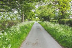 Lush green country lane Stock Photos