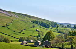 Lush green countryside of the Yorkshire Dales. With old stone barns scattered aross the pastures Stock Photos