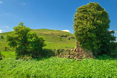 Lush Green Coutryside Stone Walled Gated Meadow Stock Photo