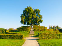 Lush green deciduous tree on a garden hill Royalty Free Stock Photography