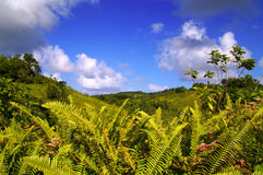 Lush green ferns Stock Photos