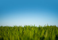 Lush green field Stock Image