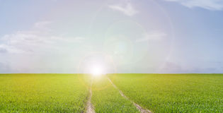 Lush green field. Tire tracks in lush green field under blue sky at sunset Stock Images
