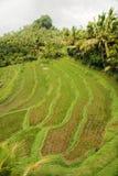 Lush green fields Royalty Free Stock Image
