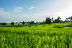 Lush green fields, cold winds Royalty Free Stock Photo