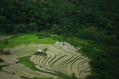 Free Lush Green Fields Near A Rain Forest Royalty Free Stock Photos - 73480778