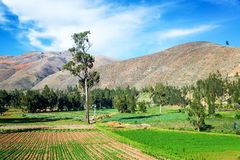 Lush Green Fields in Peru Royalty Free Stock Photo
