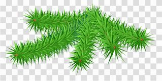 Lush green fir pine branch on transparent background. Vector illustration Royalty Free Stock Photos