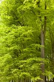 Lush Green Foliage Royalty Free Stock Images