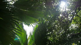 Lush green foliage in tropical forest. Coconut palm trees perspective view from floor high up. stock video footage