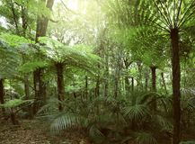 Fern trees in jungle. Lush green foliage in tropical jungle Stock Images