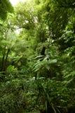 Jungle. Lush green foliage in tropical jungle Stock Photos