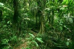 Tropical jungle. Lush green foliage in tropical jungle Stock Photos